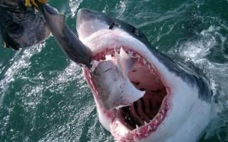 Рыбалка на акул