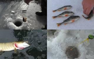 Рыбалка зимняя для начинающих