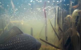 Рыбалка в камышах с лодки