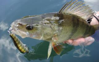 Какая рыба клюет в марте
