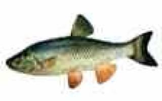 Клев рыбы по месяцам