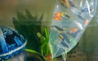 Когда запускать рыбок в новый аквариум