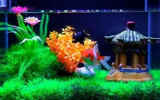 Рыбки для аквариума 15 литров