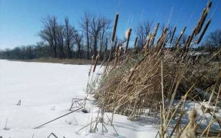 На что лучше ловить зимой окуня