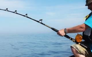 Клев рыбы в павлодаре