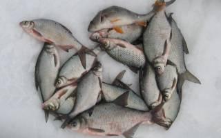 Белая рыба виды