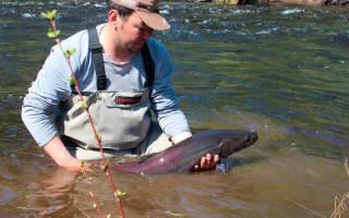 Рыбалка в якутии на тайменя
