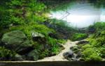 Какую воду заливать в аквариум для рыбок