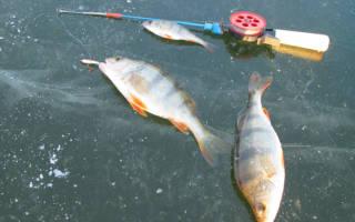 Рыбалка по первому льду окуня на безнасадку