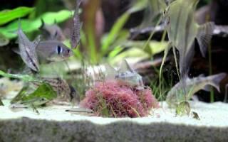Живой корм для аквариумных рыбок