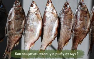 Как сушить рыбу без мух