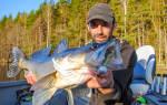 Ловля судака в июле на спиннинг