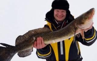 Зимняя рыбалка на онеге