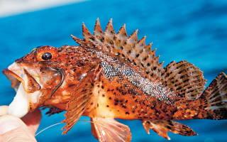 Рыбалка в черногории с берега